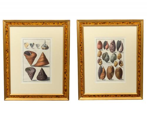 PAIR OF HAND COLORED ENGRAVINGS OF SEA SHELLS