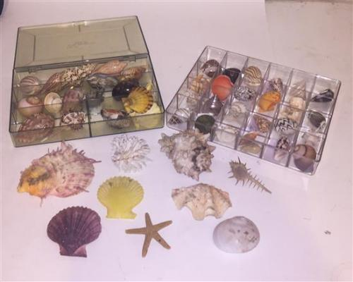 A Collection of Sea Shells.