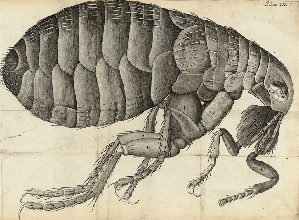 HOOKE, Robert (1635-1703). Micrographia: or some Physiological Descriptions of Minute Bodies made by Magnifying Glasses. London: John Martyn and James Allestry for the Royal Society, 1665.