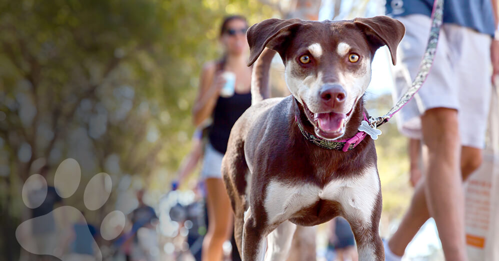 Support the Humane Rescue Alliance at the DC Walk for the Animals on Sept. 22