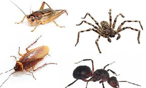 $99 for a Guaranteed Pest Control Preventative 7-Step Process