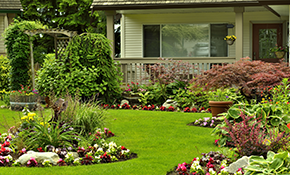 $135 for a 2-Hour Landscaping Evaluation, Reserve now for $33.75