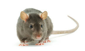 $431 for Comprehensive Interior/Exterior Rodent Control Service