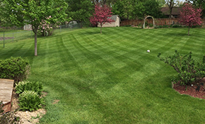 $299 for 7 Lawn Fertilizer and Weed Control Applications