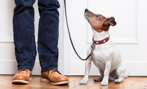 $355 for 3 In-Home Dog Training Sessions