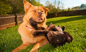 $28 for 1 Day of Dog Boarding Services (91 Pounds and Over)