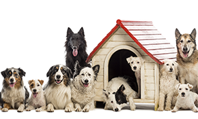 $162 for 3-Night Dog Boarding Package