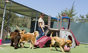 $182 for 1 Week of Dog Boarding Services (31 to 60 Pounds)