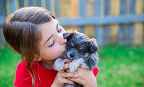 $365 for a Puppy Wellness Package and 6-Month Heartworm Prevention