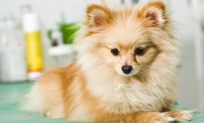 $44 for Comprehensive Pet Physical