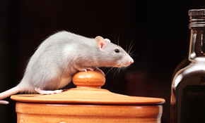 $50 for a Rodent Removal Assessment - $50 Credit Toward a Custom Removal Package Included