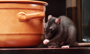 $179 for Rodent Abatement Package