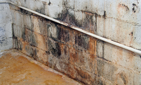 $75 Mold Inspection Plus Credit Toward Remediation