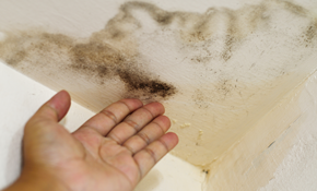 $149 Interior Home Mold Inspection and Laboratory Test