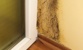 $1299 for 6 Hours of Comprehensive Mold Remediation