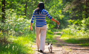 $65 for 1 Week of 15-Minute Dog Walks
