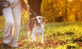 $340 for 20 Sessions of 30 Minute Mid-Day Dog Walking