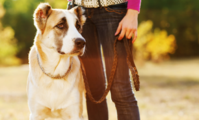 $99 for 5 Dog Walks/Pet Sits (30 Minutes Each)