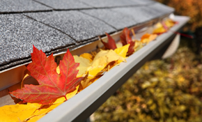 $239 for Gutter Cleaning