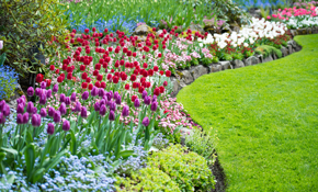 $599 for Large Lawn Spring Rejuvenation Package