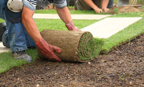 $225 for a Pallet of Fresh Sod Installation