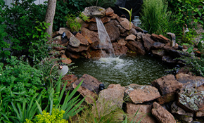 $2,339 for 12-Months of Pond Maintenance