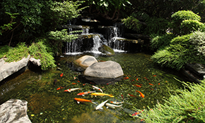 $8,999 for a 8'x11' Ecosystem Pond with Waterfall Installation