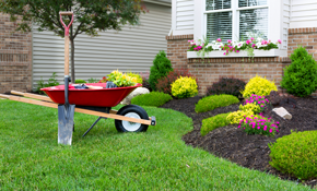 $999 Landscaping Package Including 42 Plants, Mulch, and Installation
