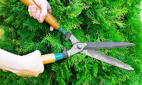 $329 for 8 Hours of Lawn or Landscape Work