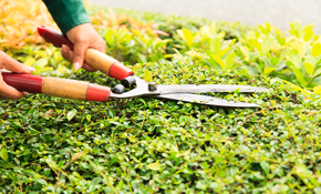 $200 for up to 4 Hours of Yard Clean-Up, Reserve Now for $30