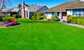 $199 for 7 Front Lawn Fertilizer and Weed Control Applications