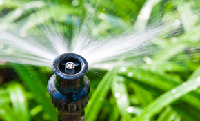 $89 Comprehensive Sprinkler Tune-Up with Efficiency Report