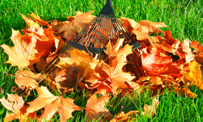 $235 for 4 Hours of Fall Leaf Clean-up