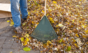 $165 for Leaf Removal Including Haul-Off
