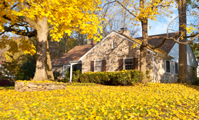 $349 Leaf Removal and Gutter Cleaning