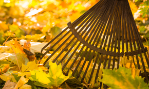 $319 Leaf Removal and Gutter Cleaning