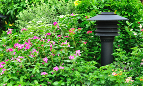 $499 for a Landscape Lighting System, Including Installation
