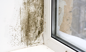 $134.99 For Water Damage And Mold Inspection Service