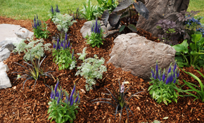 $30 for up to 3 Cubic Yards of Raw Mulch Delivered