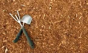 $389 for 8 Cubic Yards of Premium Mulch Delivered and Spread