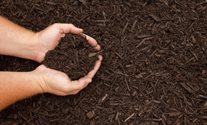 $279 for 5 Cubic Yards of Premium Mulch Delivered and Spread