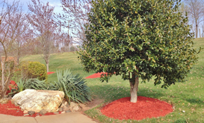 $399 for 650 Square Feet of Premium Mulch Delivered and Spread