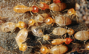 $387 for an Advance® Termite Treatment Package with Quarterly Monitoring