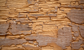 $595 for a Termite Treatment and Prevention Package with 5 Year Warranty