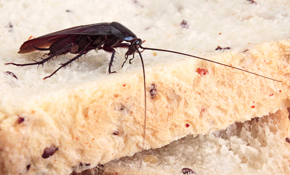 $685 for a 12-Month Pest Control Package - Up to 3,000 Square Feet