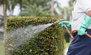 $125 for a 1-Time Pest Control Service with a 30-Day Guarantee