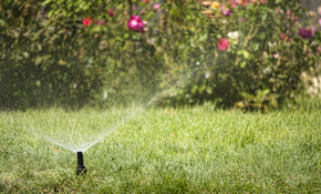 $81 Comprehensive Sprinkler Tune-Up