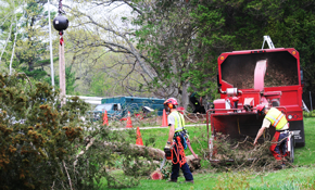 $1,699 for a 4-Person Professional Tree Crew, Tree Service, and Debris Removal for a Day