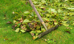 $170 for 4 Hours of Yard Clean-Up Plus Debris Disposal