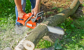$179  for a 2-Person Arborist Pruning Crew